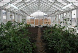 Применение люминесцентных ламп в садоводстве