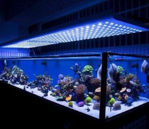 Светодиодные лампы для подсветки