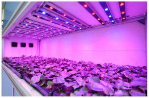 Подсветка растений с помощью ламп светодиодного типа