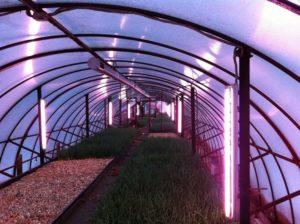Освещение теплицы ультрафиолетовыми лампами