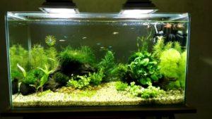 Прожекторные источники света для аквариума