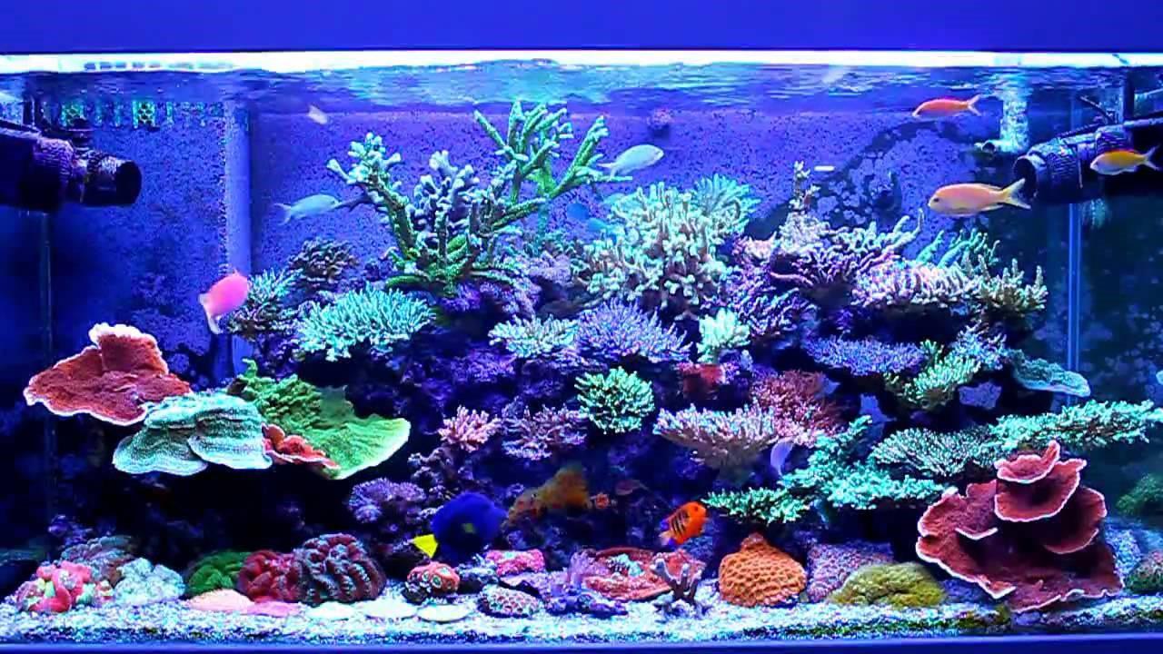освещенный аквариум