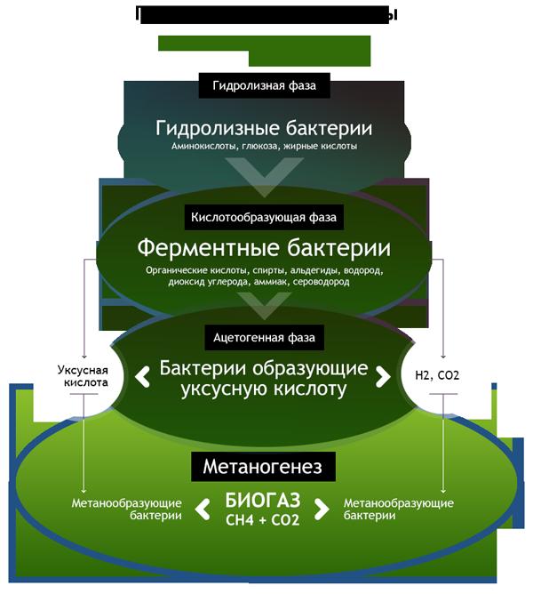 Образование биогаза